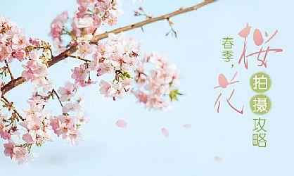 一般人都爱站在樱花树前拍摄