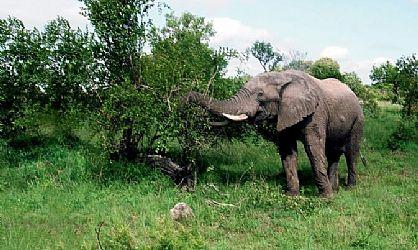 摄影达人的西双版纳之旅:拍摄丛林深处的动物